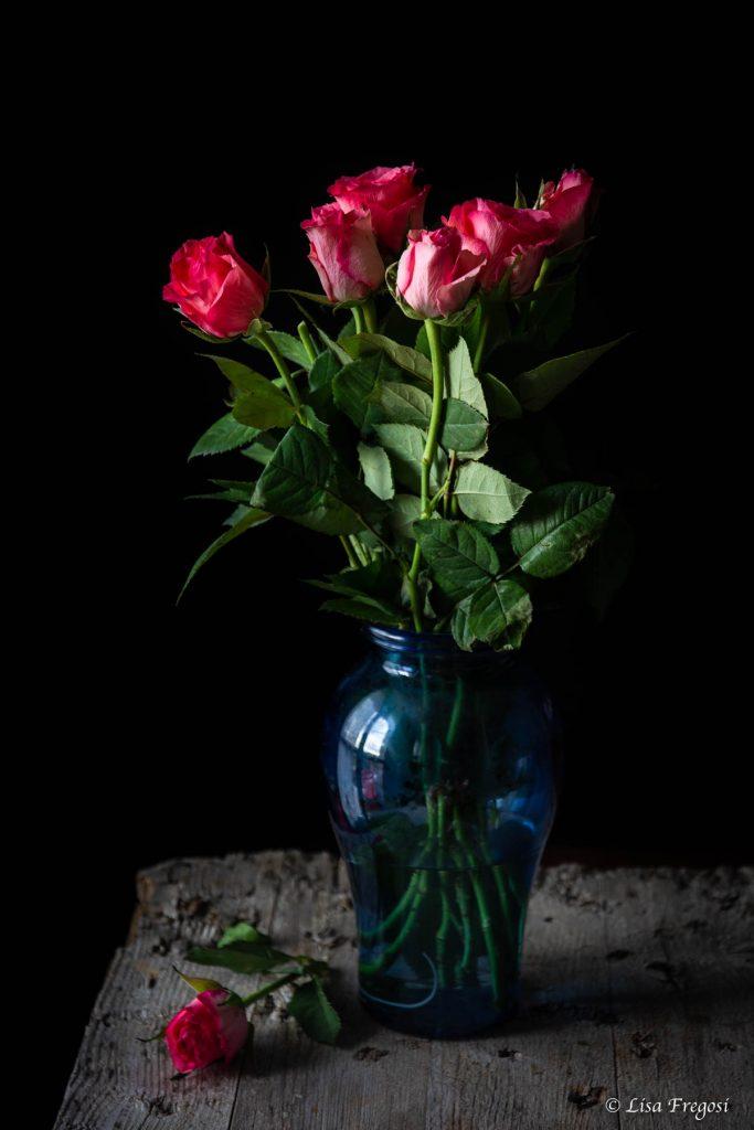 foto rose rosa