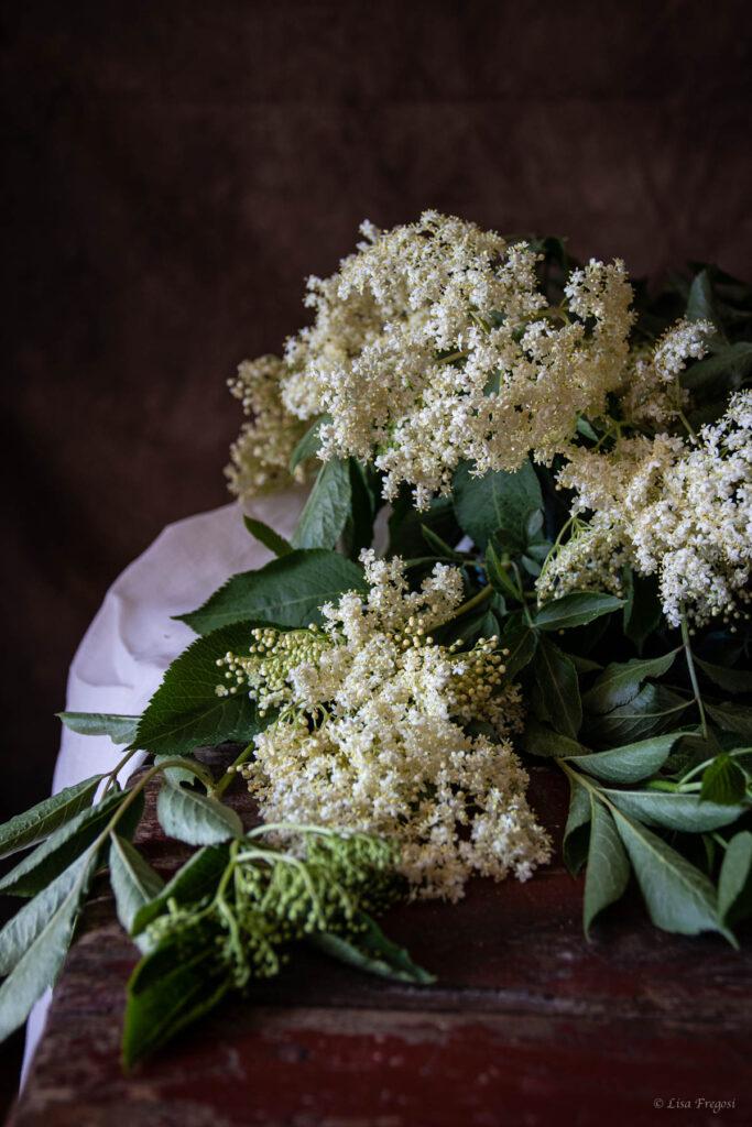 fiori di sambuco dove trovarli