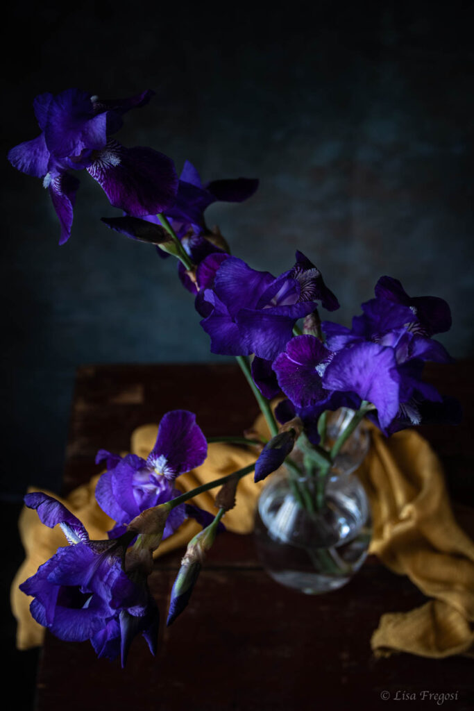 iris fotografia