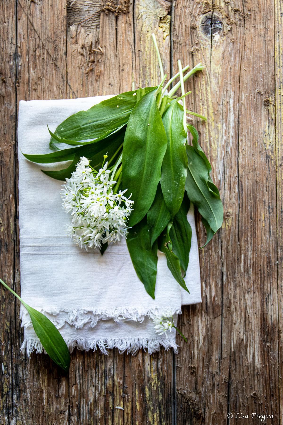 i bellissimi fiori di aglio orsino